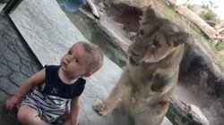 Ce bébé n'a jamais vu ce lion qui tentait de