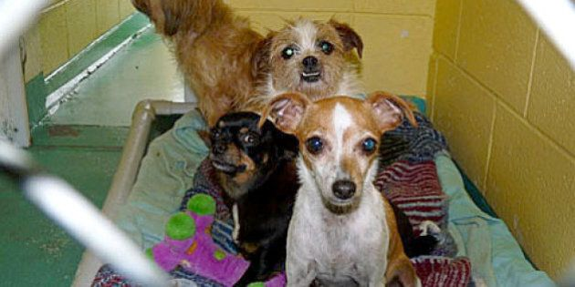 B.C. 'Puppy Mill' Operator Mel Gerling Banned From Owning Pets For 20