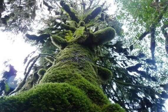 Great Bear Rainforest Will Win With Extra