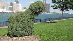 LOOK: Vandals Prune Giant Shrub