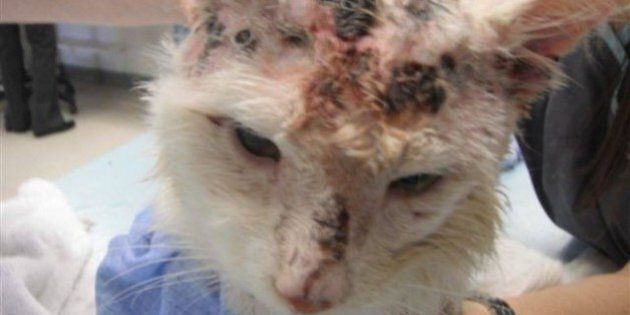 Reaction To Shooting Cat 17 Times 'Disturbing,' Lawyer