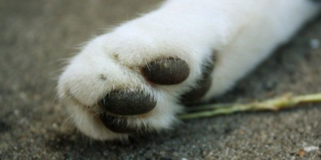This is a close-up of my cat's