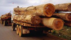 Logging Truck Accident Victim