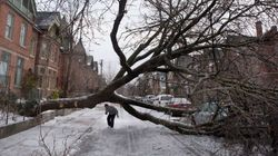 Ice Storm 2013: What Will This