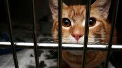 Humane Shelter Gets More