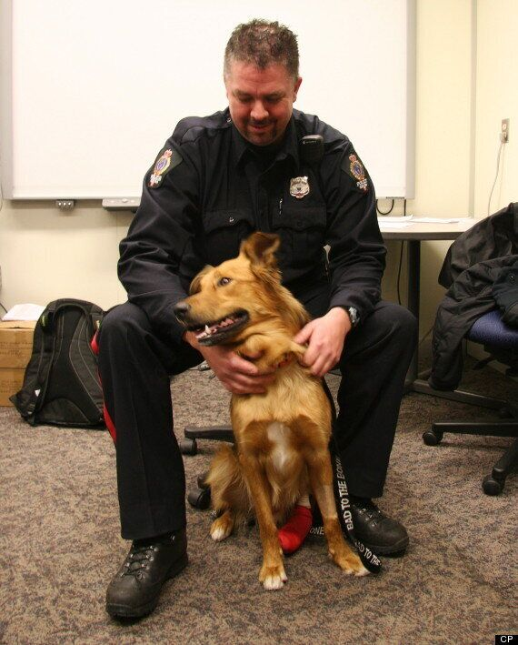 Copper, Injured Stray Dog, Adopted By Regina Police Officer Who Helped Save