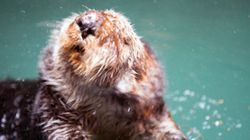 LOOK: Adorable Sea Otter