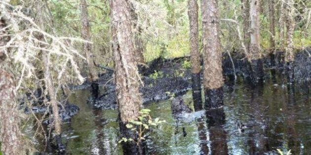 CNRL Primrose Oil Leak Likely Contaminating