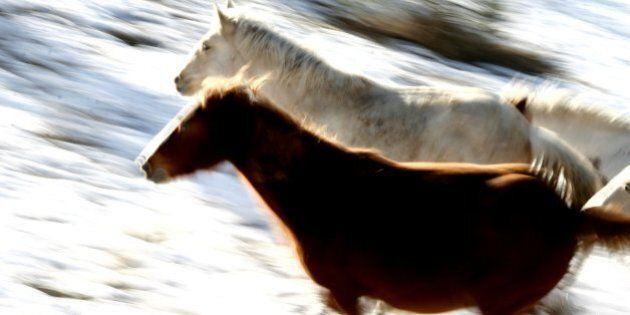 Alberta Wild Horse Cull Protesters