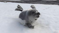 Bourdain Urges Chefs Reconsider Seal Hunt