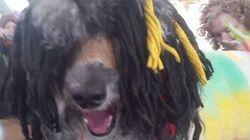 Is This Bob Marley's Spirit
