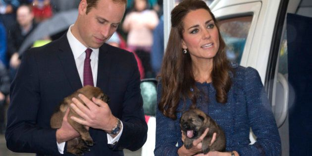 WELLINGTON, NEW ZEALAND - APRIL 16:  Prince William, Duke of Cambridge and Catherine, Duchess of Cambridge hold puppies during a visit to the Royal New Zealand Police College on April 16, 2014 in Wellington, New Zealand. The Duke and Duchess of Cambridge are on a three-week tour of Australia and New Zealand, the first official trip overseas with their son, Prince George of Cambridge.  (Photo by Mark Mitchell - Pool/Getty Images)