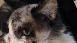 Someone Tried To Cut Off Cat's Head: