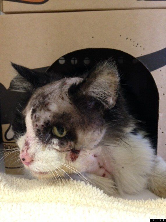 Cat Found In Cranbrook With Pellets 'Embedded In His Head'