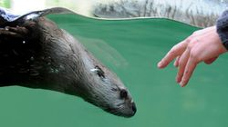 A Lifeline For Sea Otter Found Starving And