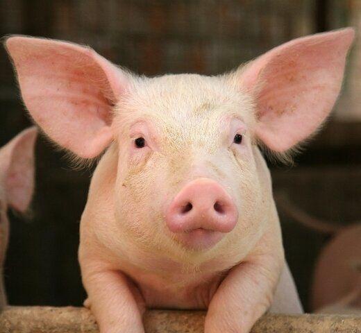 A Brighter Future For Hog