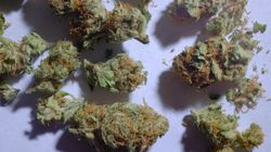 Flaw In Canada's Medical Pot
