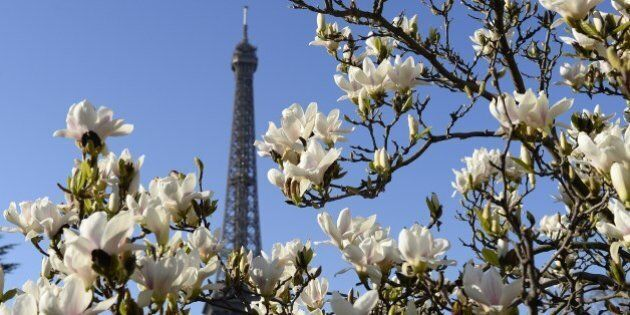 Flowers blossom near the Eiffel Tower in Paris on March 9, 2014. AFP PHOTO/ ALAIN JOCARD        (Photo credit should read ALAIN JOCARD/AFP/Getty Images)