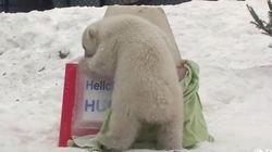 WATCH: Toronto's Polar Bear Cub Knows How To Do A Name
