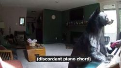 Bear-Thoven Caught Playing Piano And Police Are Endlessly