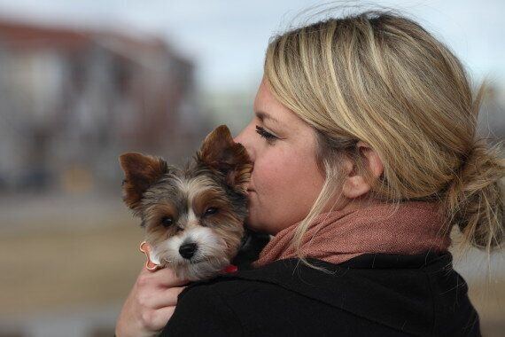 Canadian Dogs Honoured For Heroic Actions By Joining Purina Animal Hall Of