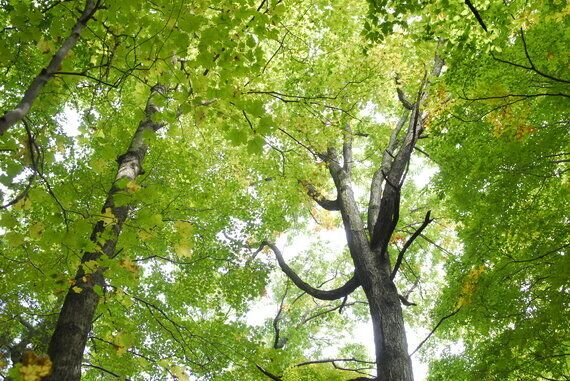 Maintain Forests And Plant Trees To Breathe With