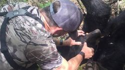 Bowhunter Defends Killing 3-Legged Bear In