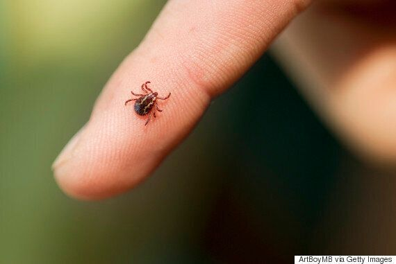 Natural Ways To Deal With Ticks This