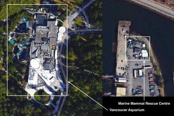 The Vancouver Aquarium Is Swimming In 'Alternative