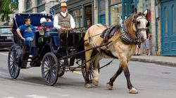 Quebec Petition To Ban Horse-Drawn Carriages Gets 34,000