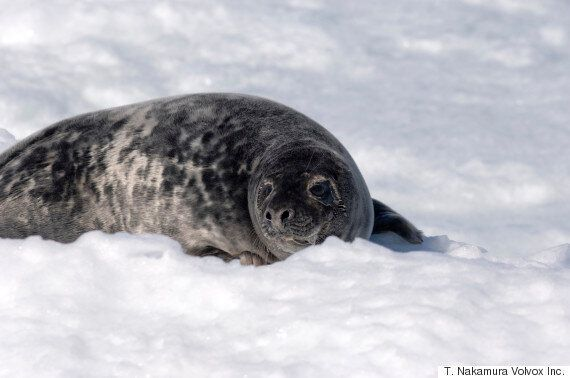 Canada Just Passed A New National Day Celebrating Seal