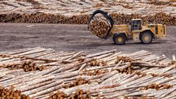 Caught Between Ottawa And Trump, Our Softwood Industry Needs