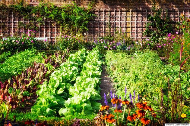Vegetable Garden 101: How To Have A Plentiful