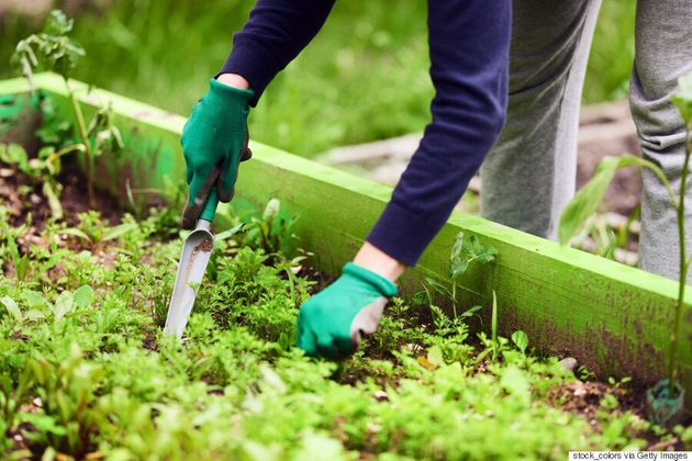 Four Steps To Create The Best Herb Garden | HuffPost Canada
