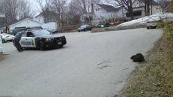 Mad Beaver Halts Traffic In