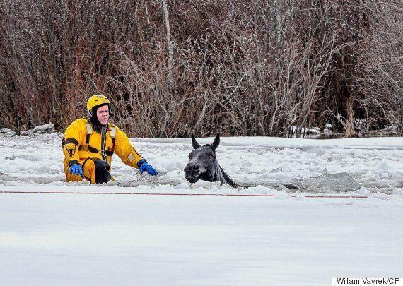 Grande Prairie Fire Department Rescues Horses That Fell Through Thin