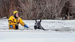 7 Horses Rescued After Falling Through Ice In