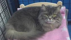 IKEA Donates Doll Beds For Cats At Toronto