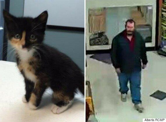 Sick Red Deer Kitten Stolen From Petland Store, RCMP Searching For