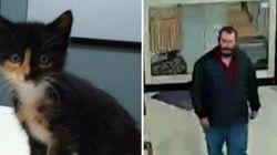 Sick Kitten Stolen From Alberta Pet