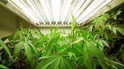 Ontario Judge To Pot Grower: Get A New