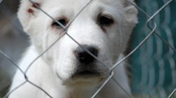 Canada's Government Wants To Set Animal Protection Back 20