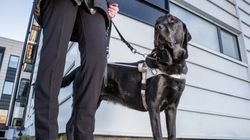 Discrimination Against People With Service Dogs Is Sadly Still A