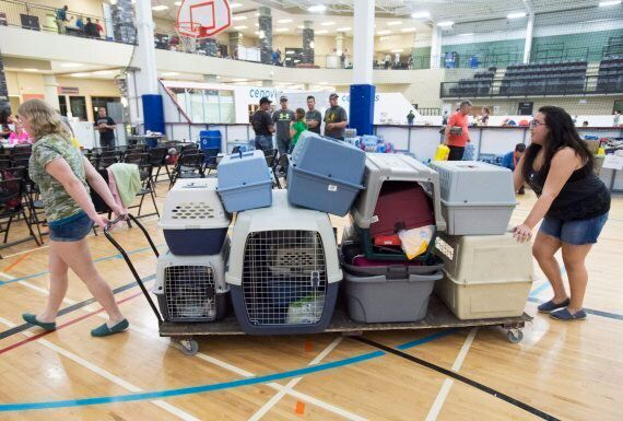 Fort McMurray Fire: Animal Lovers Defy Authorities To Rescue