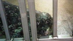 Vancouver Aquarium Disputes Whistleblower's Seal