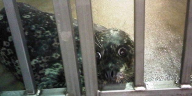 Vancouver Aquarium Disputes Seals' Condition At