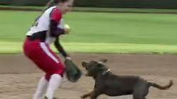 WATCH: Dog Steals Mitts, Internet