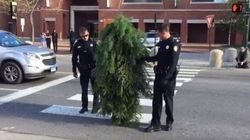 Dude Dressed Up As Tree Gets