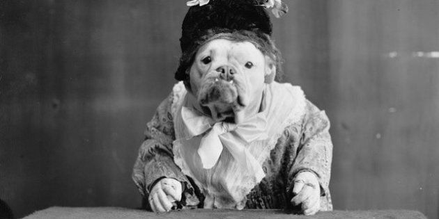 Humans Have Been Obsessed With Dressing Up Dogs And Cats For More Than A Century