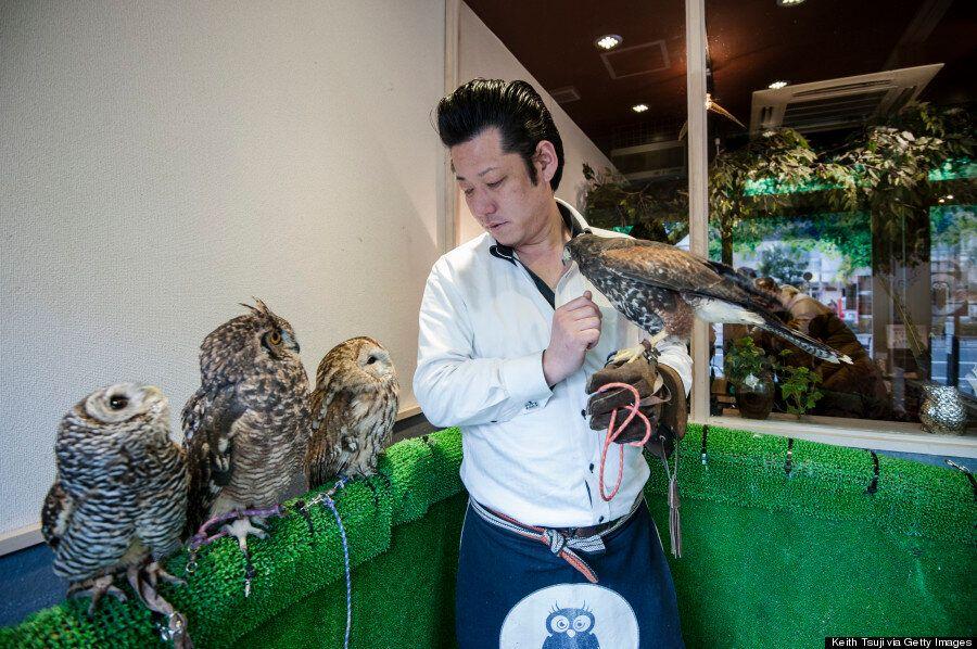 Fukuro No Mise, Tokyo's Owl Cafe, Looks Like A Real Hoot